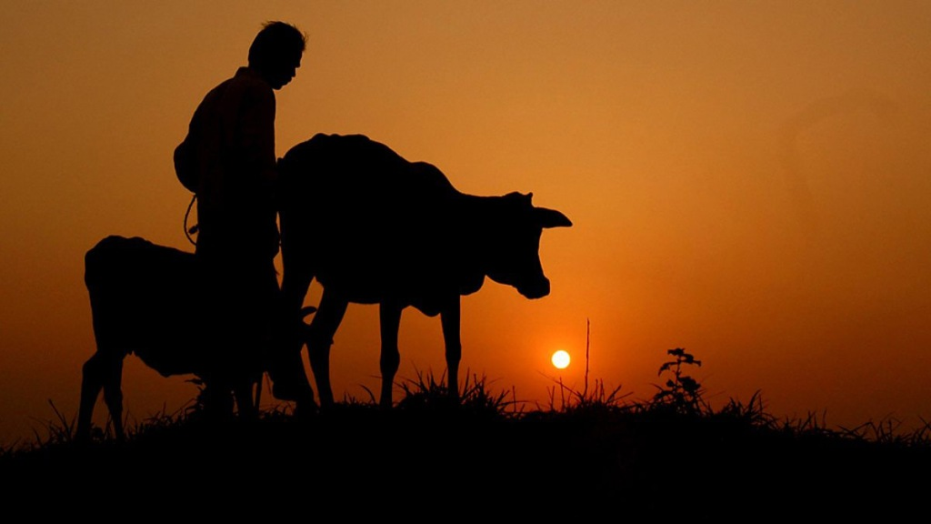 Photographic representation of godhuli, with a hazy orange sky in the background and the shadowy silhouettes of cows in the foreground.
